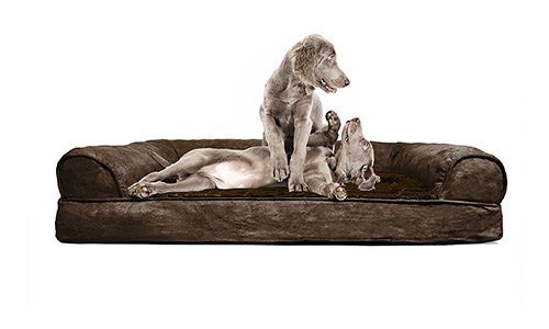 FurHaven presents Orthopedic Couch for Dogs and Cats