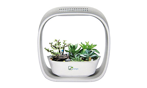 The Spigo Indoor LED Light Glow Garden